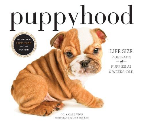 9781419707735: Puppyhood 2014 Wall Calendar