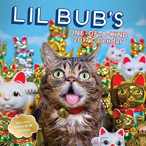 9781419721656: Lil Bub 2017 Wall Calendar