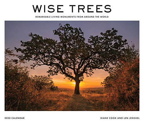 9781419730733: Wise Trees 2020 Calendar: Remarkable Living Monuments from Around the World