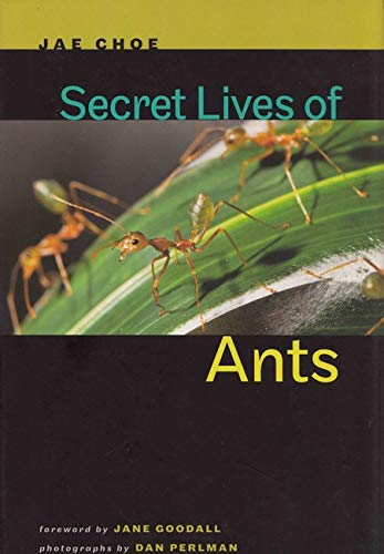 Secret Lives of Ants: Jae Choe