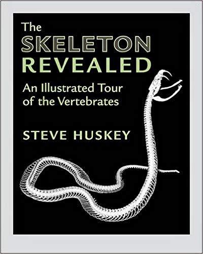 The Skeleton Revealed
