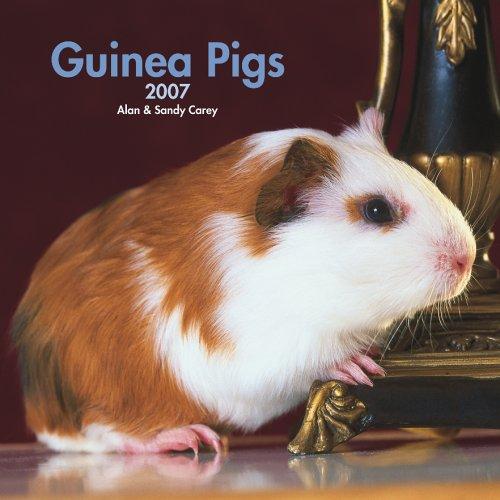 9781421604565: Guinea Pigs Calendar 2007