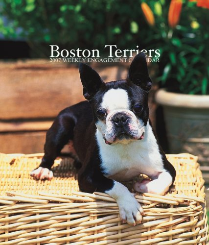 Boston Terriers 2007 Weekly Calendar: Browntrout Publishers