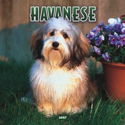 9781421607283: Havanese 2007 Calendar