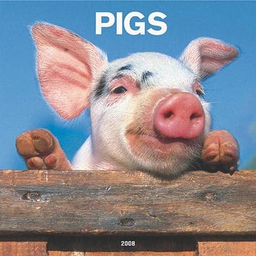 9781421620749: Pigs 2008 Square Wall Calendar (Multilingual Edition)