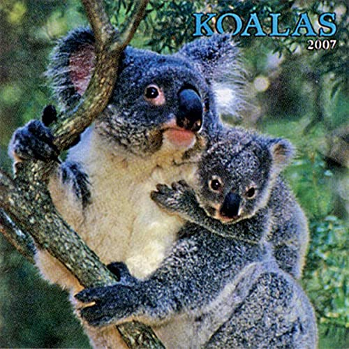 9781421621005: Koalas 2008 Square Wall Calendar (German, French, Spanish and English Edition)