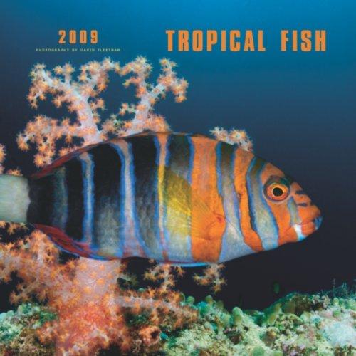 9781421634791: Tropical Fish 2009 Calendar