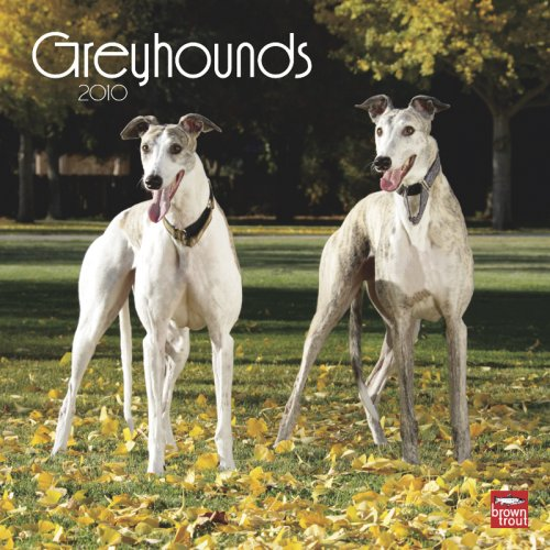 9781421650814: Greyhounds 2010 Square Wall (Multilingual Edition)