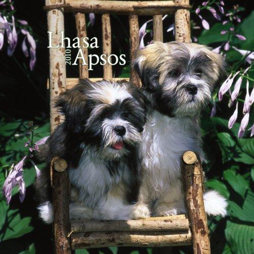 9781421651248: Lhasa Apsos Puppies 2010 Mini Wall