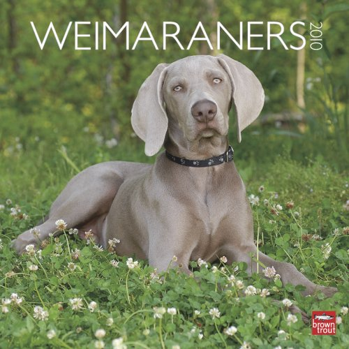 9781421656564: Weimaraners (International) 2010 Wall