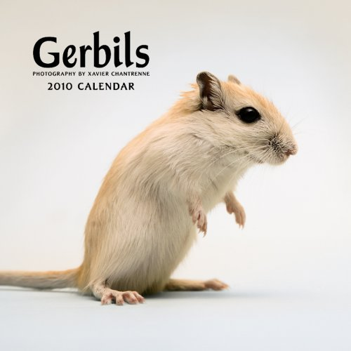 Gerbils 2010 Square Wall (Multilingual Edition): BrownTrout Publishers Inc