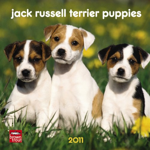 Jack Russell Terrier Puppies 2011 7X7 Mini Wall: BrownTrout Publishers Inc