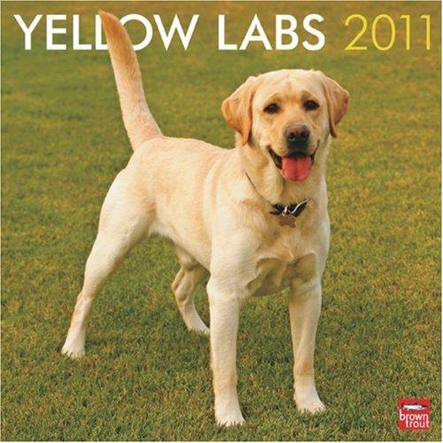 9781421663593: Yellow Labs 2011 Calendar