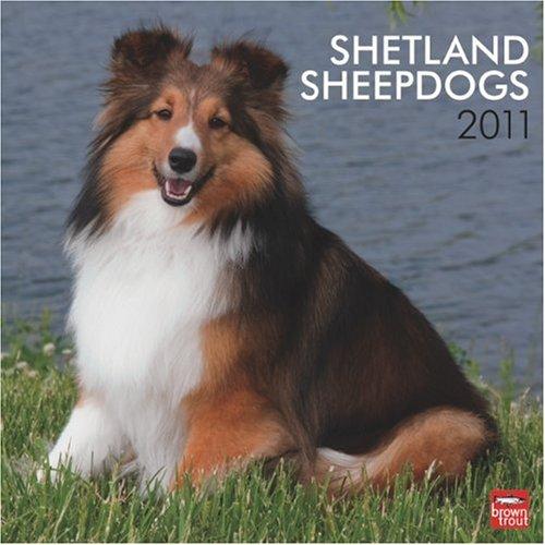 9781421664026: Shetland Sheepdogs 2011 Square 12X12 Wall