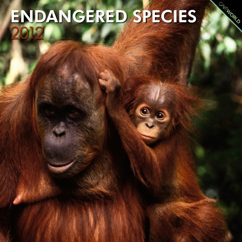 Endangered Species 2012 Square 12X12 Wall Calendar: BrownTrout Publishers Inc