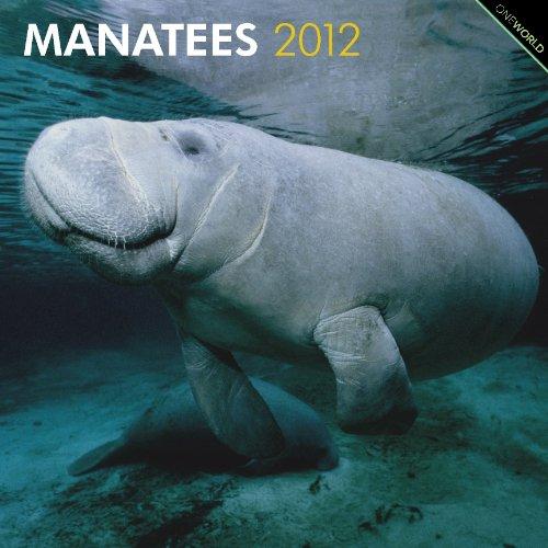 9781421675343: Manatees 2012 Square 12X12 Wall Calendar