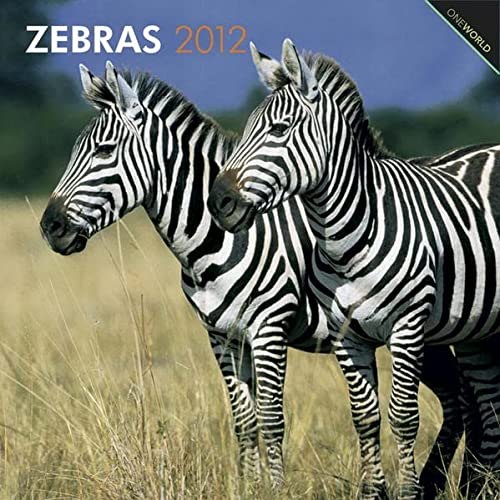 9781421675749: Zebras 2012 Square 12X12 Wall Calendar (Multilingual Edition)