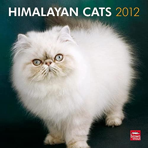 9781421676098: Himalayan Cats 2012 Square 12X12 Wall Calendar (Multilingual Edition)