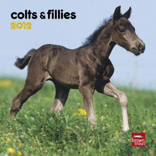9781421679372: Colts & Fillies 2012 Calendar