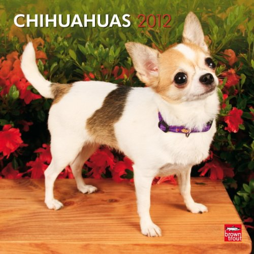 Chihuahuas 2012 Square 12X12 Wall Calendar (Multilingual Edition): BrownTrout Publishers Inc