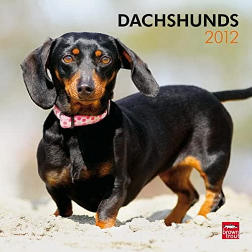 Dachshunds 2012 Square 12X12 Wall Calendar (Multilingual Edition): BrownTrout Publishers Inc