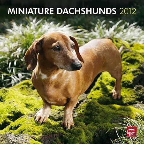9781421686127: Miniature Dachshunds 2012