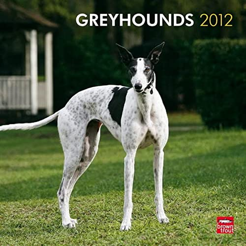 9781421686240: Greyhounds 2012 Square 12X12 Wall Calendar (Multilingual Edition)