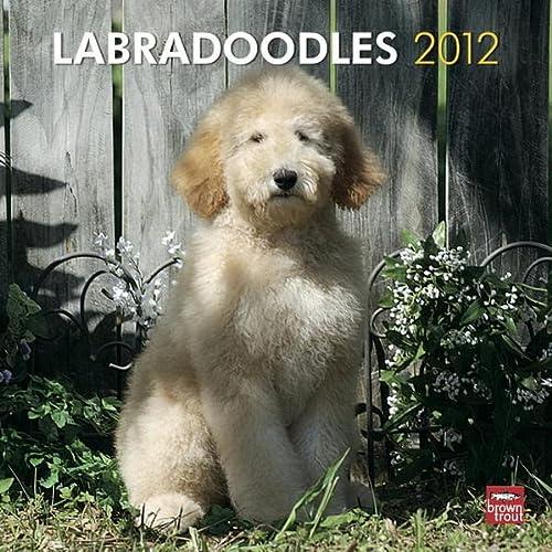 9781421686288: Labradoodles 2012 Square 12X12 Wall Calendar