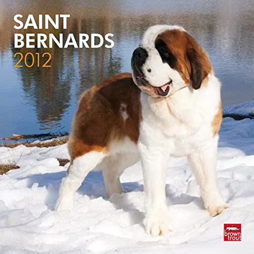 Saint Bernards 2012 Square 12X12 Wall Calendar (Multilingual Edition): BrownTrout Publishers Inc