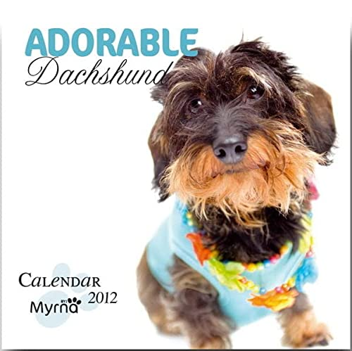 9781421688145: Distinguished Dachshund by Myrna 2012 Square 12x12 Calendar