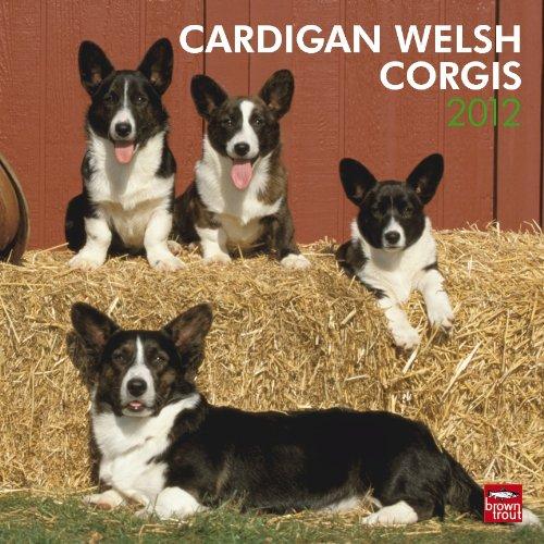 9781421688411: Cardigan Welsh Corgis 2012 Square 12x12 Wall Calendar