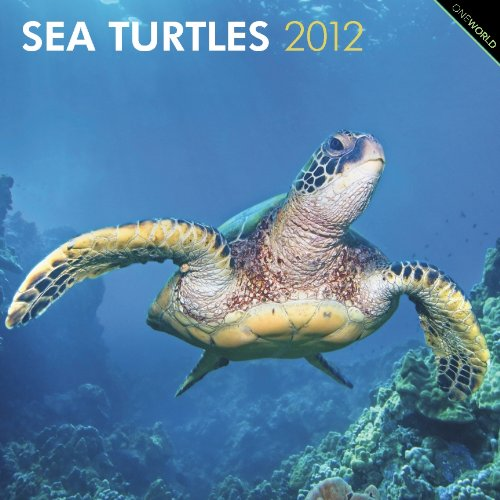 Sea Turtles 2012 Square 12x12 Wall Calendar: BrownTrout Publishers Inc