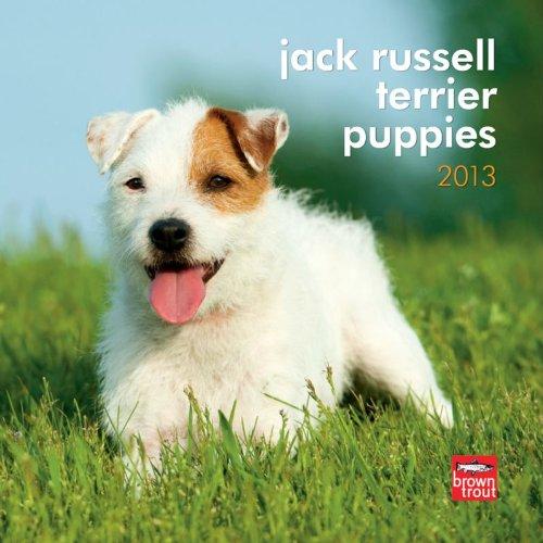 9781421695235: Jack Russell Terrier Puppies 2013 7X7 Mini Wall