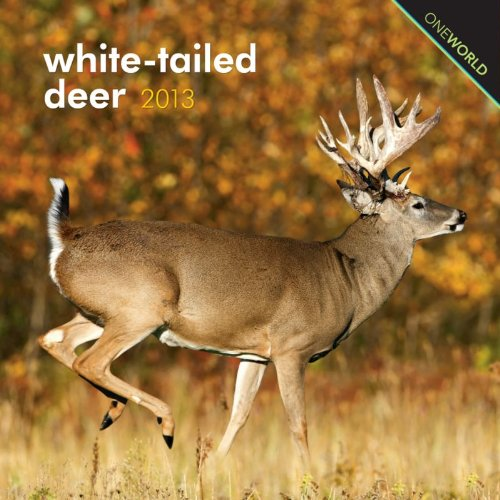 White-Tailed Deer 2013 7X7 Mini Wall: Browntrout Publishers