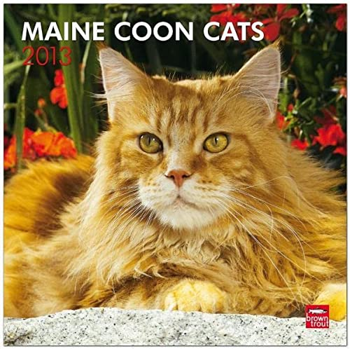 Maine Coon Cats 2013 Square 12X12 Wall Calendar (Multilingual Edition): BrownTrout Publishers