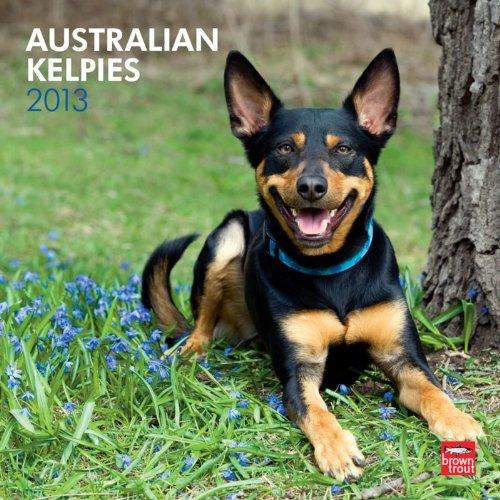 9781421697543: Australian Kelpies 2013 Square 12X12 Wall (Multilingual Edition)