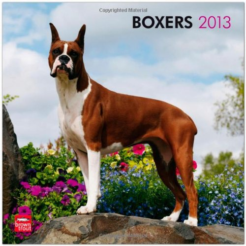 9781421697758: Boxers 2013 Square 12X12 Wall Calendar (Multilingual Edition)