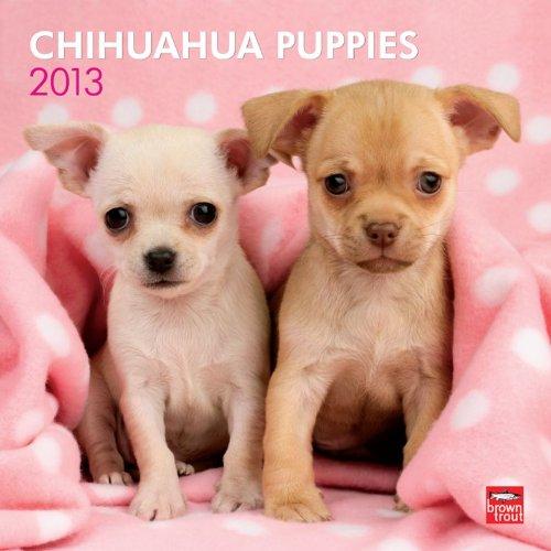 9781421697864: Chihuahua Puppies 2013 Calendar