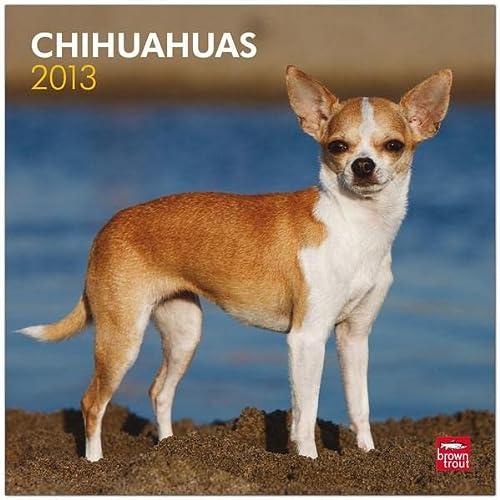 9781421697871: Chihuahuas
