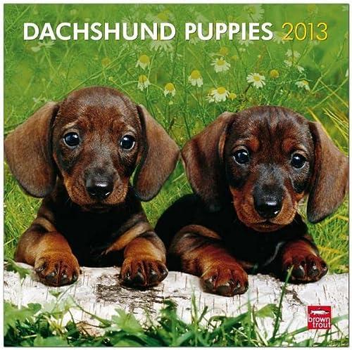 9781421697932: Dachshund Puppies 2013