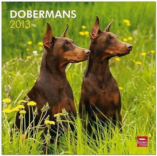 9781421698007: Dobermans 2013 Square 12X12 Wall Calendar (Multilingual Edition)