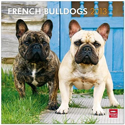 9781421698069: French Bulldogs 2013 Square 12X12 Wall Calendar (Multilingual Edition)