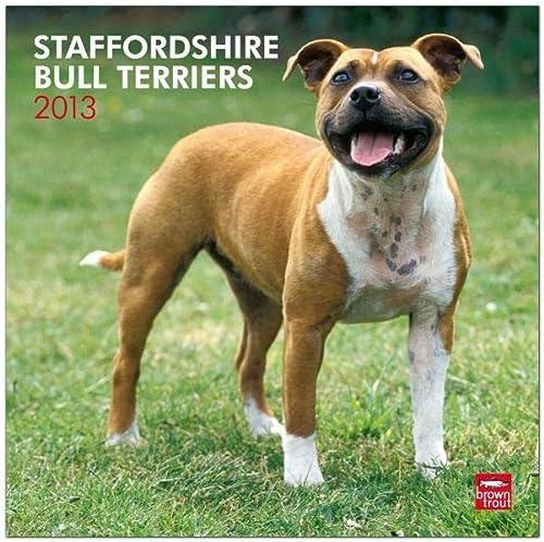 9781421698809: Staffordshire Bull Terriers 2013: Bull Terrier