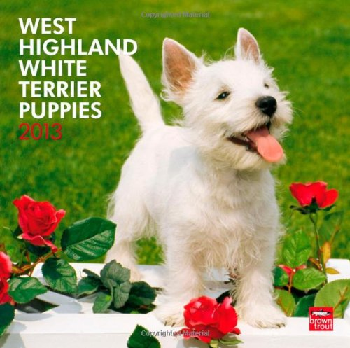 9781421698878: West Highland White Terrier Puppies 2013 Square (Multilingual Edition)
