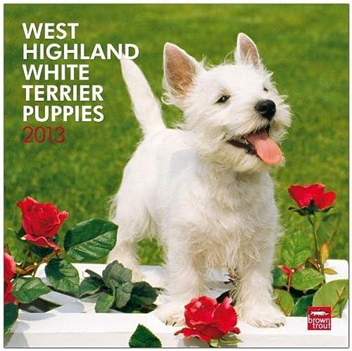 9781421698878: West Highland White Terrier Puppies 2013: Westy Welpen