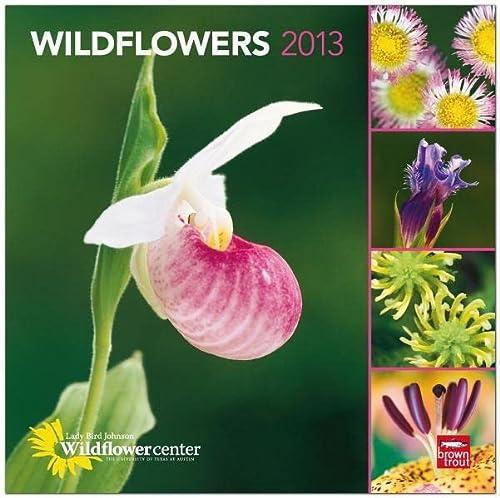 9781421699561: Wildflowers 2013 Square 12X12 Wall Calendar