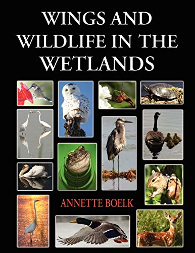 9781421891002: Wings and Wildlife in the Wetlands