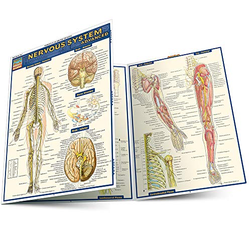 9781423215066: Nervous System Advanced (Quick Study Academic)