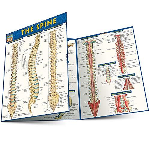 9781423220237: The Spine (Quick Study Academic)