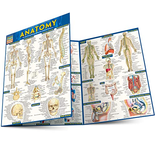Anatomy Laminated Reference: BarCharts Inc